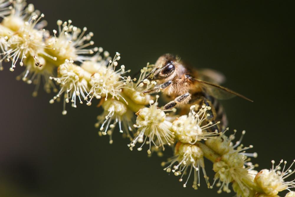 Amodeo Carlo chestnut honey Bio Sicilian black bee ACAMCAST20 Apicoltura Carlo Amodeo